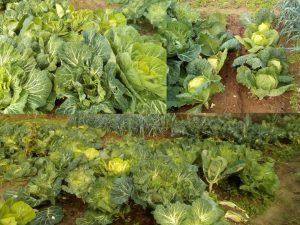 Vantagens de Saúde preferindo AlimentosBiológicos
