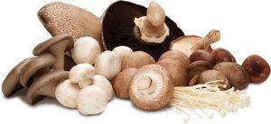 Cogumelos riqueza nutricional!