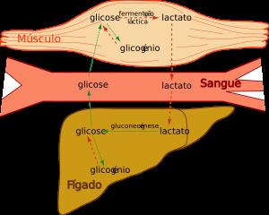Supercompensação de Glicogénio Muscular para Aumento do Rendimento Desportivo
